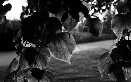 """Bonusbild, svartvit version av """"Grönt, men inte länge till"""""""
